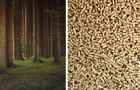 L'utilisation de pellets n'est PAS éco-durable: une étude révèle l'erreur des gouvernements et des industries