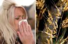 È tempo di allergie: scoprite come combatterne i sintomi con questi potenti oli essenziali