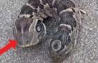 Een vrouw ontdekt een vreemd tweekoppig wezen in haar tuin: wat zou dit kunnen zijn?