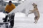 Cães e gatos na neve