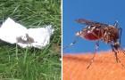 Mit diesem selbstgemachten Mittel vertreibt ihr Mücken und andere Insekten