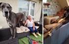 Dit is de Deense dog genaamd Freddy. Hij is officieel de grootste hond ter wereld!
