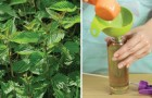 Natural, economical, and easy to prepare weed killers!