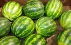 5 Regeln, mit denen du die beste Melone auswählen kannst