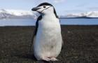 Il a étudié les pingouins en 1911: ce qu'il a découvert était tellement extrême qu'il l'a gardé secret pendant plus d'un siècle