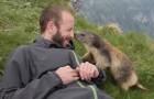 A marmota vence a timidez e resolve fazer amizade com o alpinista!