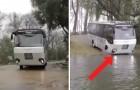 Deze bus verlaat de weg en gaat verder... op het water!