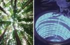 Questo materiale ricrea la fotosintesi in laboratorio: ecco come si potrà smaltire la CO2 e ricavare energia