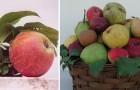 Brutte ma buone: uno studio rivela che le varietà di mela antiche contengono più antiossidanti