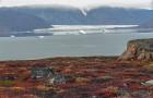 Het smelten van gletsjers zou virussen en bacteriën aan het licht kunnen brengen die verborgen zijn in de permafrost