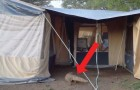 Un varano gigante si dirige verso la tenda: ecco come rendere un viaggio INDIMENTICABILE