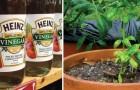 9 tuiniersproblemen die je kan verhelpen met doodgewone azijn