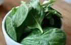 5 aliments d'origine végétale ayant une teneur en protéines incroyablement élevée