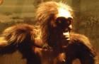 L'antenato dell'uomo potrebbe non essere africano: scoperti nuovi fossili in Europa