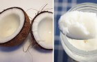 L'olio di cocco non è un'alternativa così salutare: ecco cosa c'è da sapere su questo ingrediente
