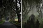 Une charmante route d'Irlande du Nord appelée, le chemin des haies obscures, vous captivera par son charme.