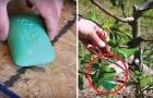 Seife im Garten: Ein effizienter und günstiger Tipp