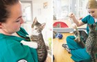 À la recherche d'une personne prête à caresser les chats: la clinique vétérinaire est submergée de candidatures