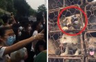 Festival de carne de cachorro: os ambientalistas conseguem salvar mais de 1000 cães, muitos deles roubados das famílias!