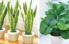 12 Pflanzen, die auch an den dunkelsten Ecken deines Hauses überleben