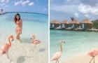 Mer cristalline et une touche de rose: découvrez la plage où on peut nager avec des flamants roses