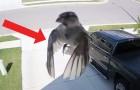 Die Flügel des Vogels sind perfekt mit der Kamera synchronisiert: das Ergebnis ist HYPNOTISCH