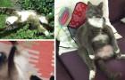 19 chats qui ont trop mangé d'herbe à chat... et qui se sont mis K.O.!