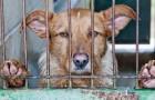 Schokkende wet in Spanje: 5,000 euro boete voor wie een verweesd dier REDT