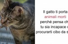 15 kuriose Fakten über Katzen, die du wahrscheinlich noch nicht kanntest