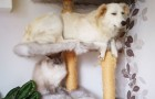 10 cani che si comportano come fossero dei gatti