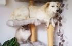 10 perros que se comportan como si fuesen gatos