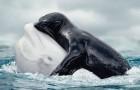 18 photos qui captent l'essence de la vie marine comme vous ne l'aviez jamais vue auparavant