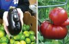 18 merkwürdige Arten von Gemüse, die wie alles andere aussehen