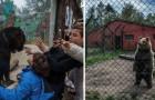 Deze aangrijpende foto's laten zien wat het betekent voor dieren om in een dierentuin te leven