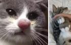 17 foto's van katten die de strijd tegen de bijen hebben verloren