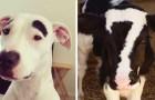 24 superbes animaux au look vraiment bizarre