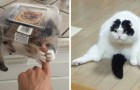 21 foto's van katten waar je gewoon wel om moet lachen