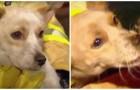 Tutta la famiglia era in salvo tranne uno dei cani: poi i pompieri scoprono perché è rimasto in casa