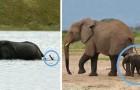 Voici des adorables éléphanteaux qui vont vous mettre de bonne humeur en 1 seconde!