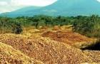 Eine Saftfabrik lädt Tonnen von Orangenschalen in einer Einöde ab, wodurch ein echter Wald entsteht
