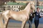 Viene considerato il cavallo più bello al mondo: ecco il segreto del suo mantello d'argento