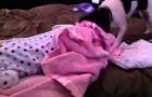 Dog covers baby with the blanket