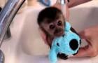 Le petit singe prend son bain