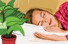 9 planten die je thuis zou moeten hebben staan om elke nacht lekker te slapen