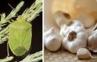 8 rimedi naturali efficaci per scacciare le cimici