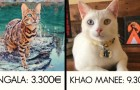 18 superbes races de chats qui coûtent une fortune