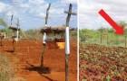 I contadini africani installano alveari lungo i campi per un motivo geniale
