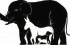 Seules les personnes avec une intelligence supérieure à la moyenne peuvent trouver plus que 6 animaux: combien en voyez-vous?