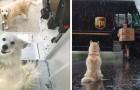 Es gibt eine Facebook-Seite auf der die UPS-Kuriere Fotos der Hunde posten, die sie während ihrer Touren treffen
