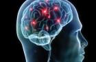 Sensazionale scoperta in campo scientifico: anche il cervello ha la sua